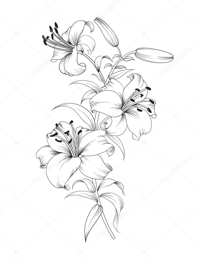 Group of lily flowers.