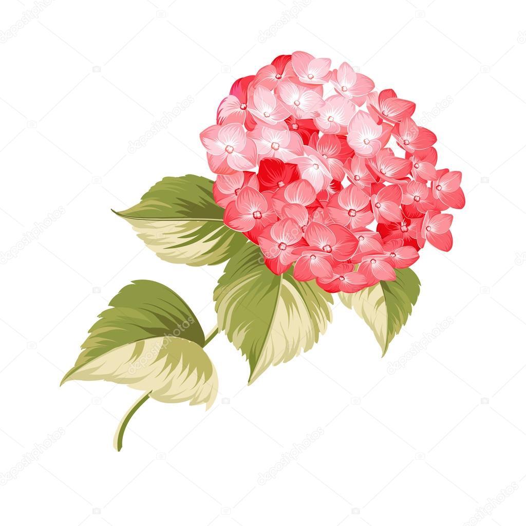 The Hortensia flower.
