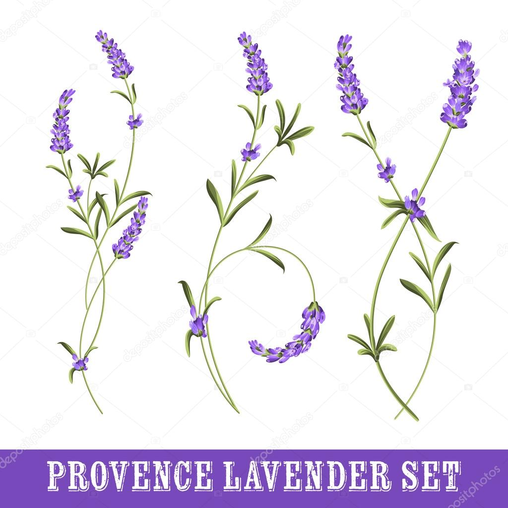 Set of lavender.