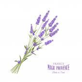 Fotografie Lavender elegant card.
