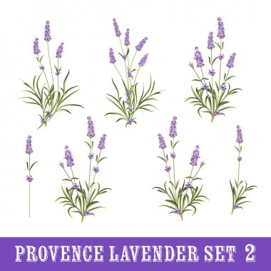 Set of lavender flowers elements