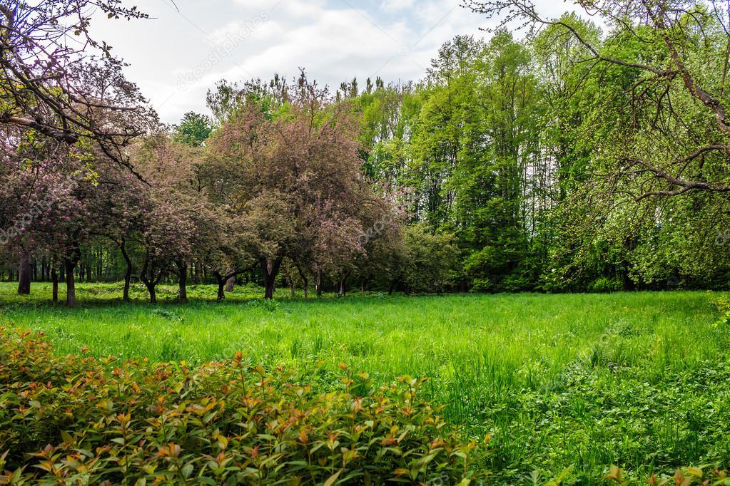 Prato in giardino con alberi da frutto foto stock pellinni 103447466 - Foto di alberi da giardino ...
