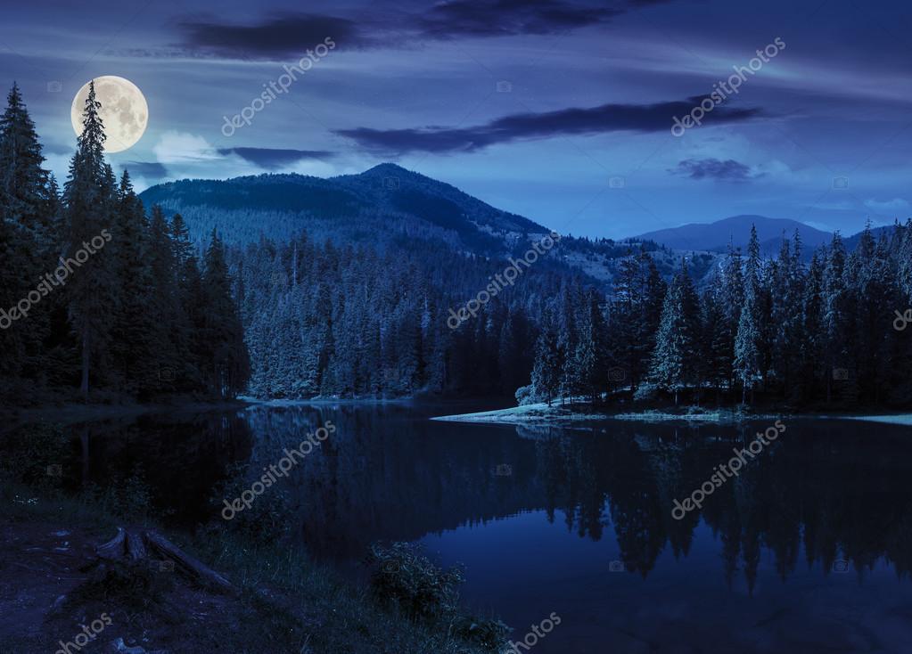 Фотообои сосновый лес возле горного озера ночью