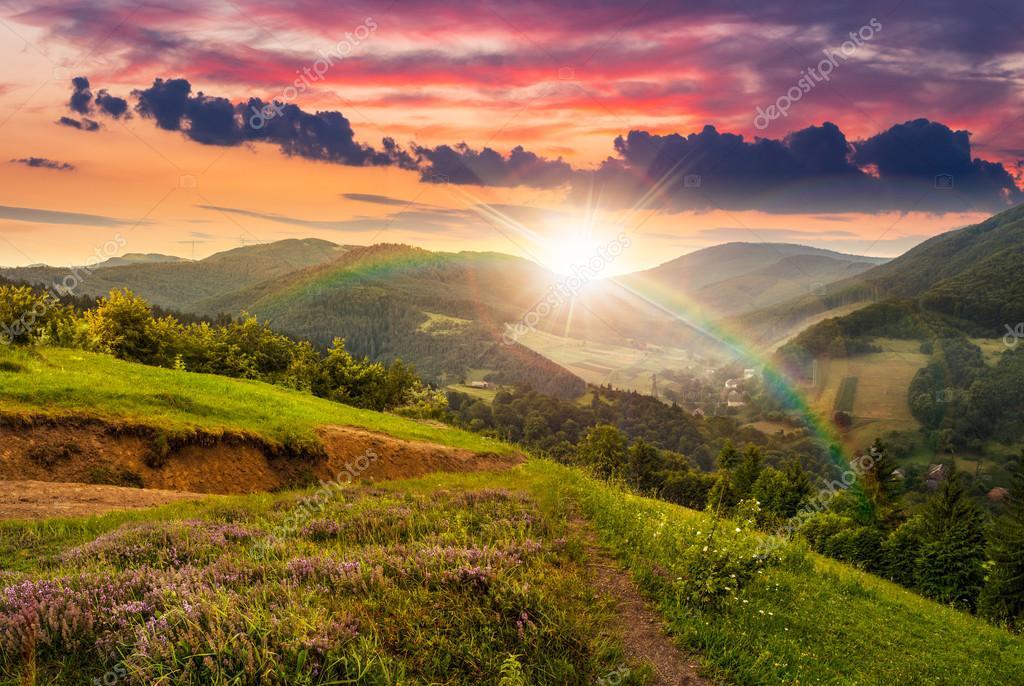 цветы на лугу склона с лесом на закате — Стоковое фото ...