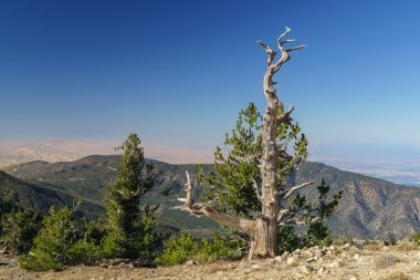 Summit of Mount Pinos