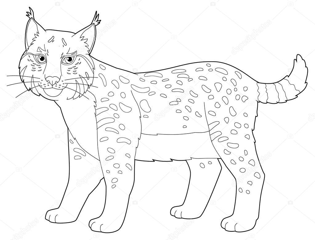 Imagenes Animadas Para Colorear: Dibujos Animados De Animales - Lince