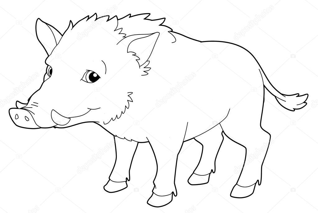 Dibujos animados de animales - jabalí - aislado - página para ...