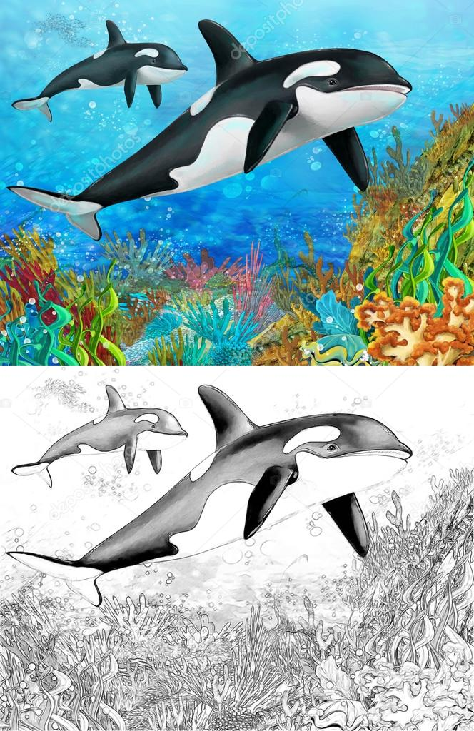 The coral reef - killer whale - with coloring page