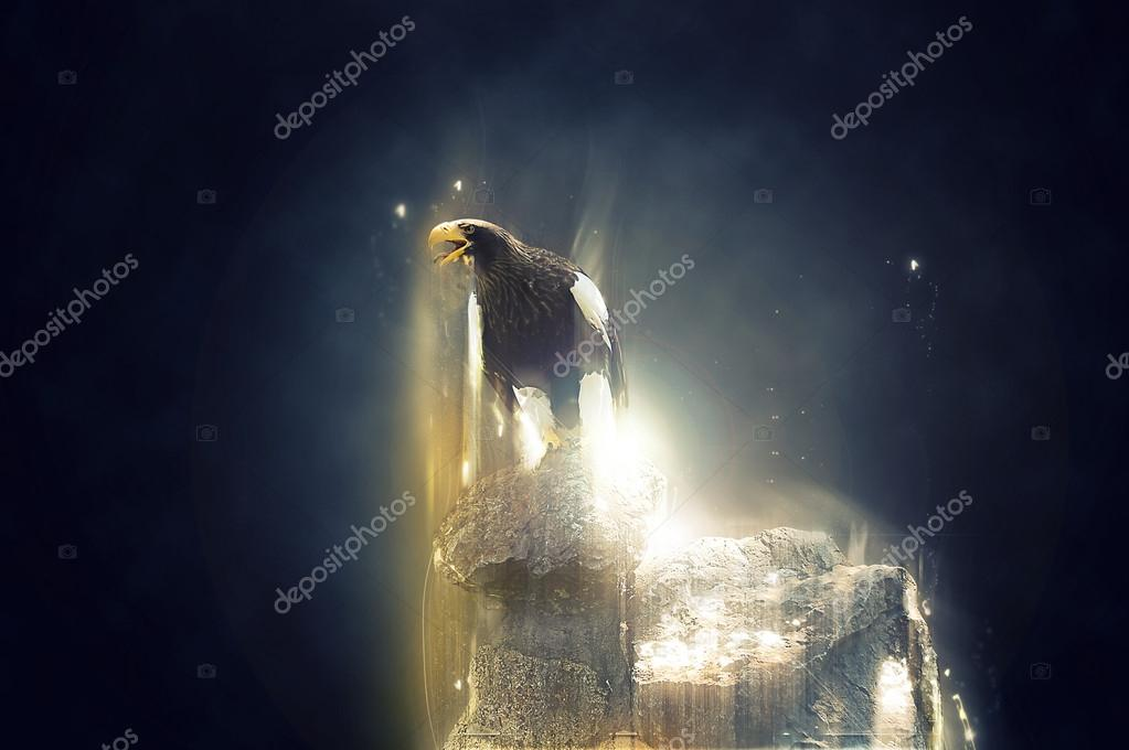 Eagle standing on a rock, abstract animal concept
