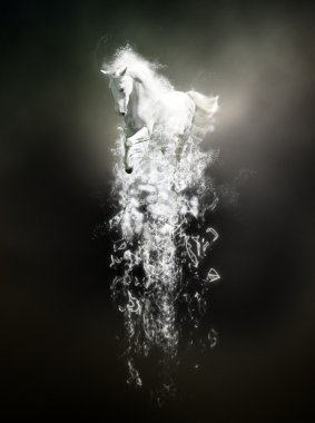 White horse running, abstract animal concept on black background