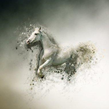 White horse, animal concept