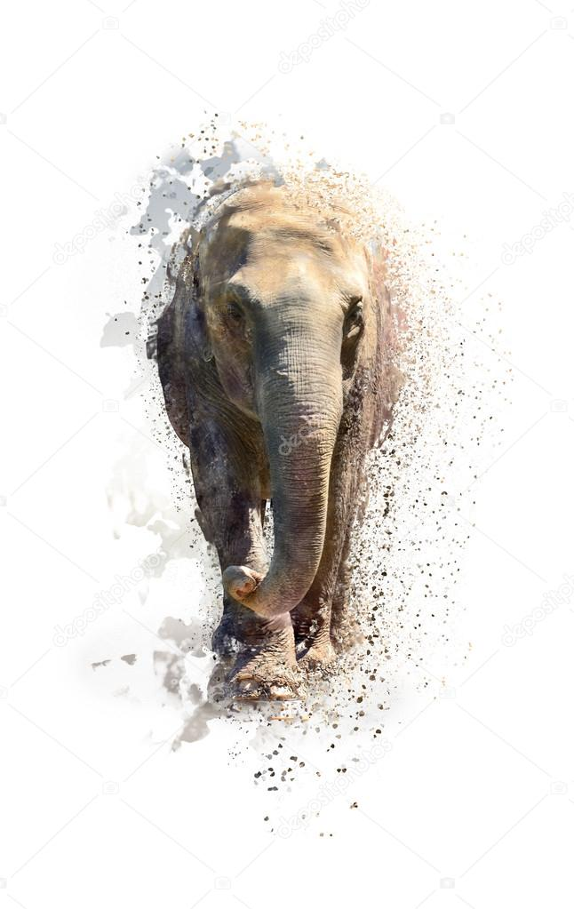 Portrait of an elephant, abstract animal concept isolated on white