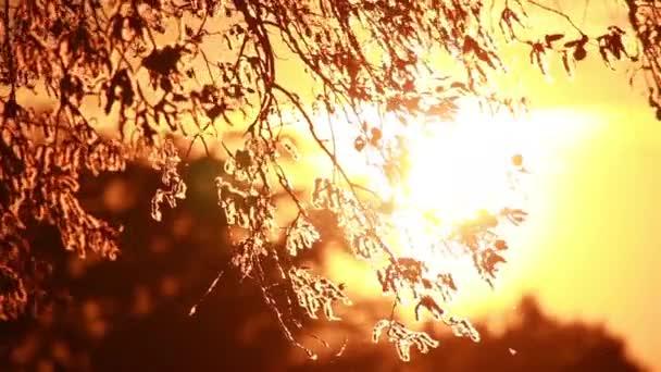 pyl a stromu listí na vítr v západu slunce