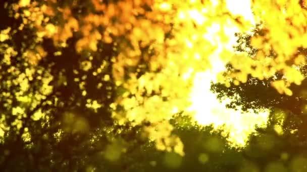 pyl a strom listy na vítr v západu slunce hd