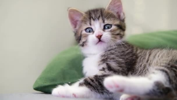 striped kitten wakes up, yawns and stretches. kitty looking at camera. Concept of happy adorable cat pets. Slow motion