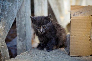 Cute homeless cat looking at camera