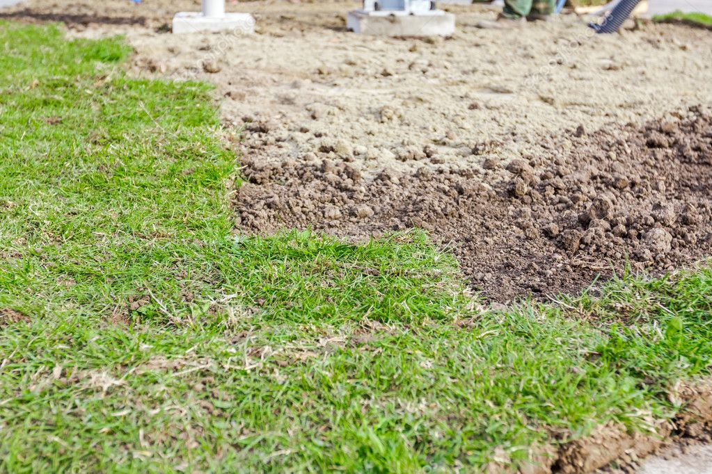 Partially placed sod for new lawn, unrolling grass