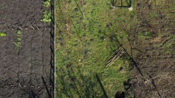 A felső nézet a nyugdíjasok, a férfi és a nő metszés ágak gyümölcsfák gyümölcsöskert segítségével lopók kora tavasszal.