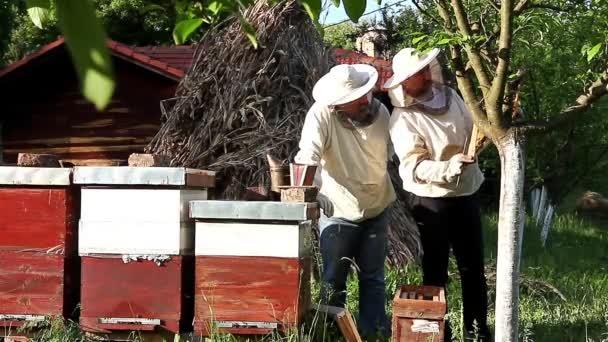 Práce ve včelařství