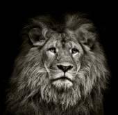 smutný Lev