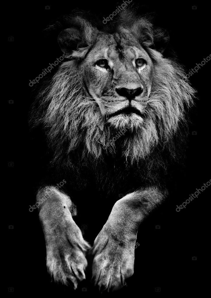 чёрный лев картинки