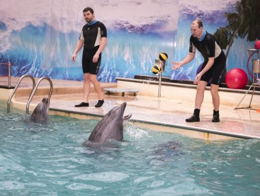 Dolphin plays balls with the trainer in the Rostov dolphinarium