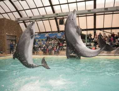 Dolphins: Mom and  son in a jump in the Rostov dolphinarium