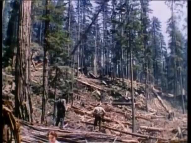 Loggers watching sequoia trees falling