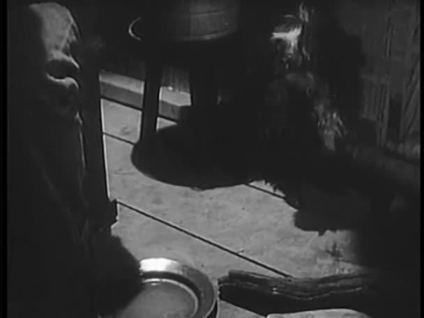 Muž jídlo pro psa