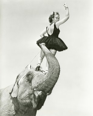 Circus performer stands on elephant's head