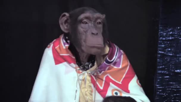 Monkey  sticking out lower lip
