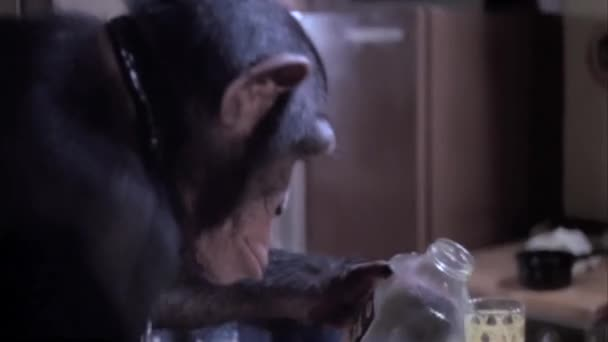 Monkey pouring and drinking juice