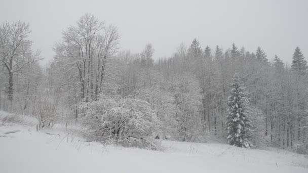 Winterlicher Schneefall im Wald, fallender Schnee. Winterlandschaft. Schneebedeckte Bäume