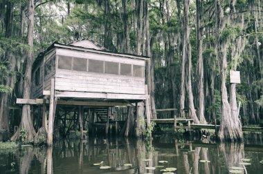 Bayou Swamp Shack Scene with Spanish Moss