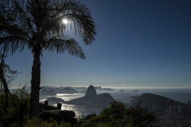 Rio de Janeiro Brazil Sunrise Palm Tree Sugarloaf Mountain