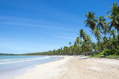 Remote Tropical Brazilian Beach Palm Trees