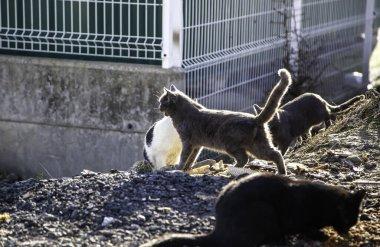 Abandoned stray cat, free animals, mammals, pets