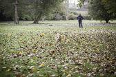 Kutya fut őszi