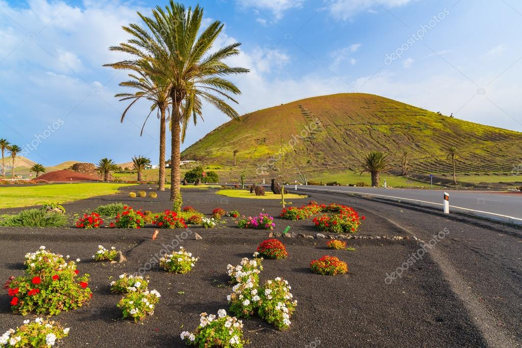 Blumen und Palme entlang einer Straße zum Dorf Yaiza — Stockfoto ...
