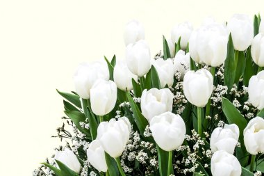 Large bouquet of white tulips
