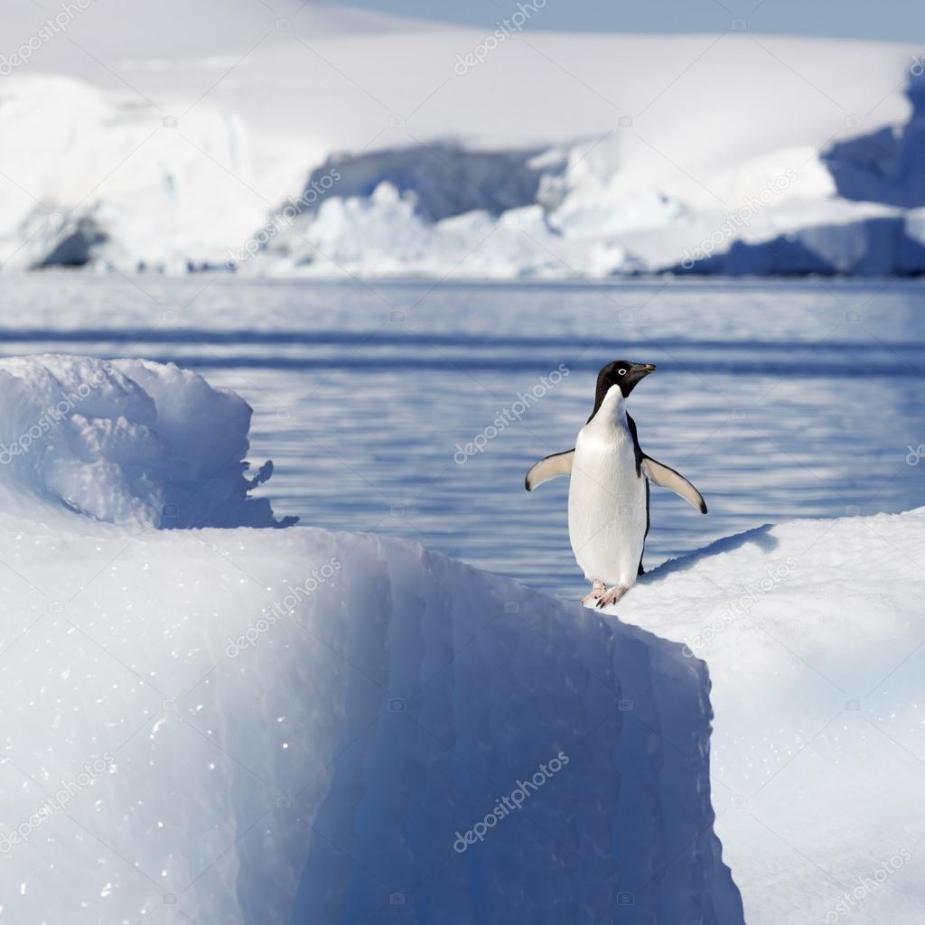 Penguin on glaciers and icebergs in Antarctica