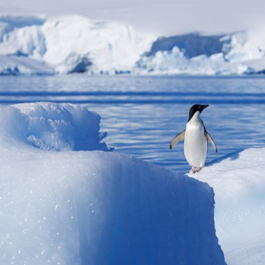 Nature and landscapes of Greenland with penguin