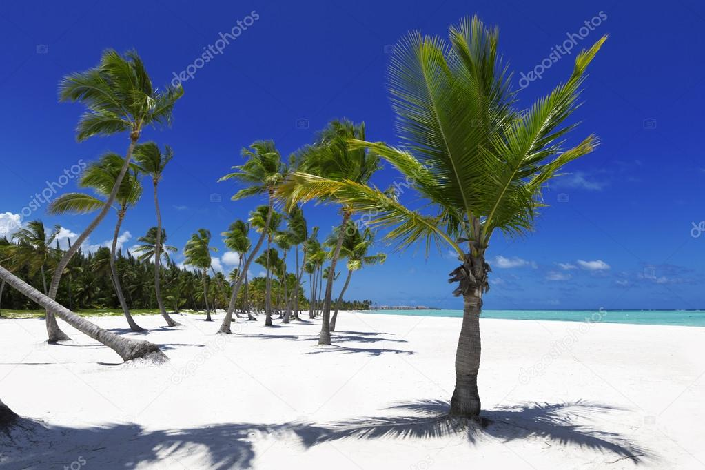Beach on tropical island
