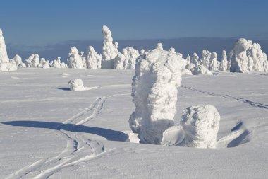 Heavy snowfalls and trees