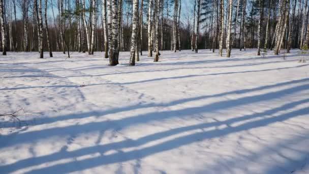 Sonniger Tag im Winterwald