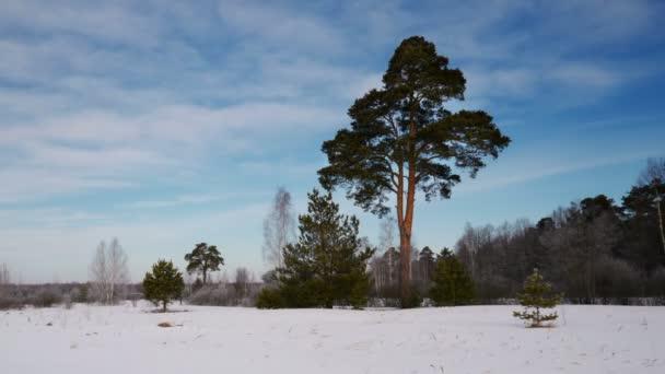 A téli időszakban magányos fa