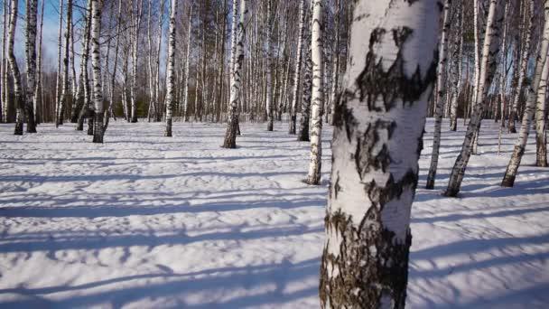 A téli időszakban a nyírfa bőrönd
