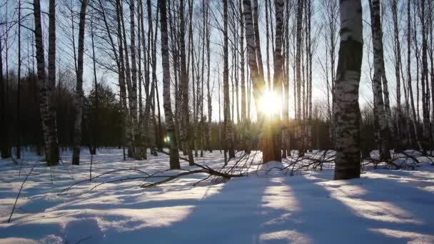 východ slunce v zimním lese