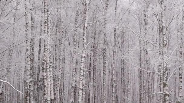 Pásztázás a havas téli erdő