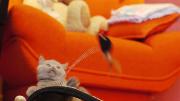 cica játszani játék egérrel